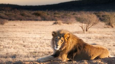 safari in style