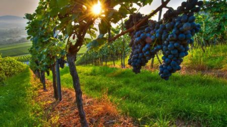 Become a wine expert in South Africa's wine regions - Savile Row Travel
