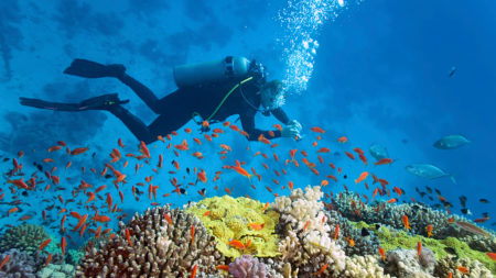 Marvel at the underwater life in the Maldives - Savile Row Travel