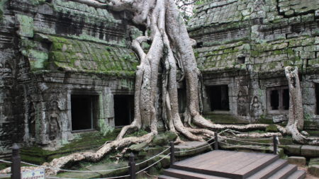 Explore ancient ruins of Ta Prohm at dawn in Cambodia - Savile Row Travel