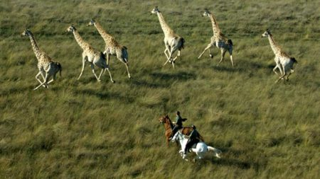 Ride amongst giraffe on safari in Botswana - Savile Row Travel