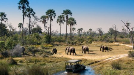 Get up close to elephant on a Botswana safari - Savile Row Travel