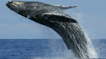 Whale and dolphin watching off Sri Lanka's coasts - Savile Row Travel