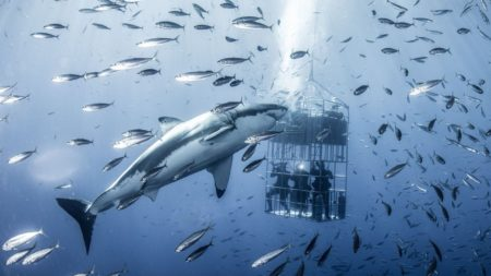 Shark Cage Experience, Cape Town