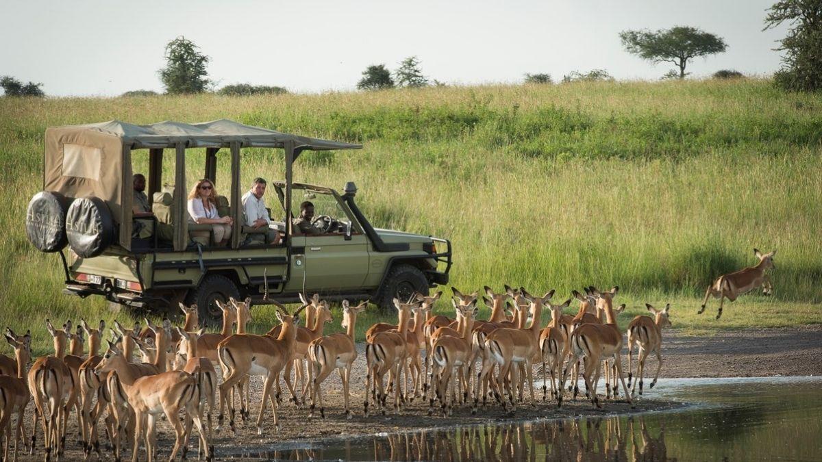 Dunia Camp Game Drive Tanzania
