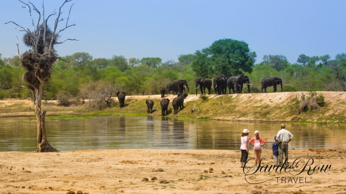 Travel Bucket List Safari