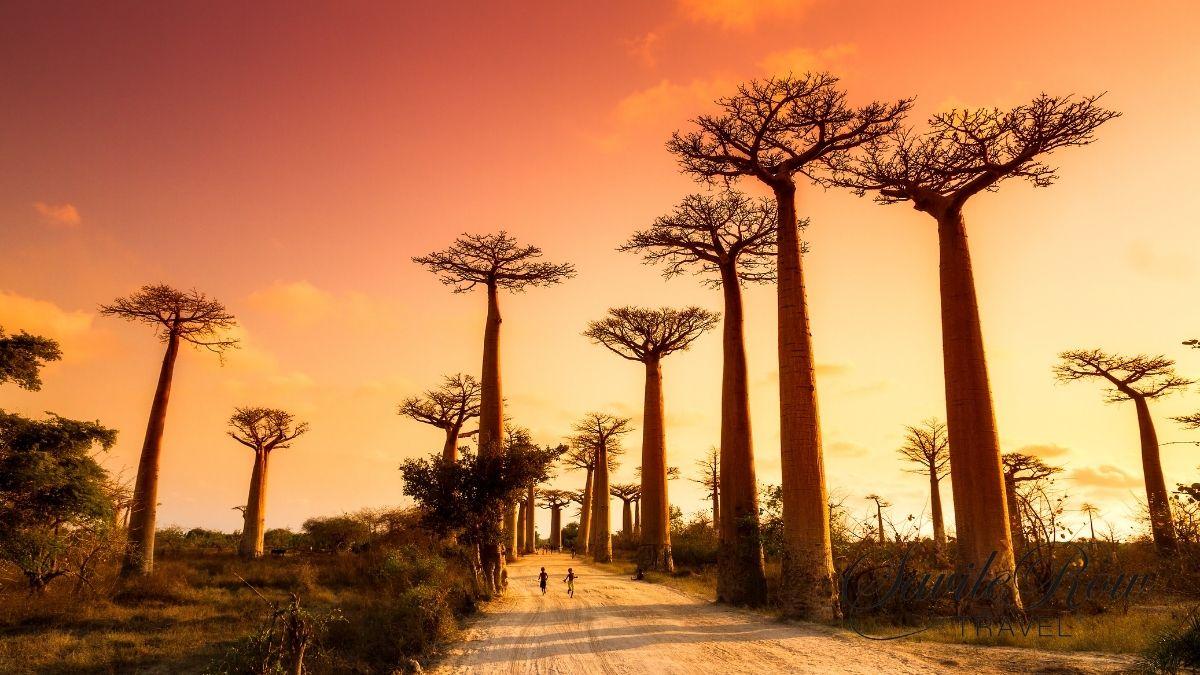 Travel Bucket List Baobab Trees
