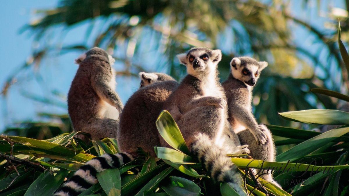Travel Bucket List Lemurs