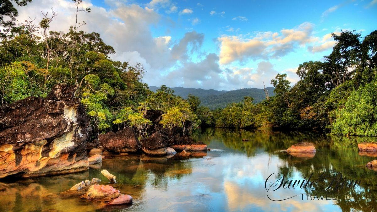 Madagascar Rainforest Canva