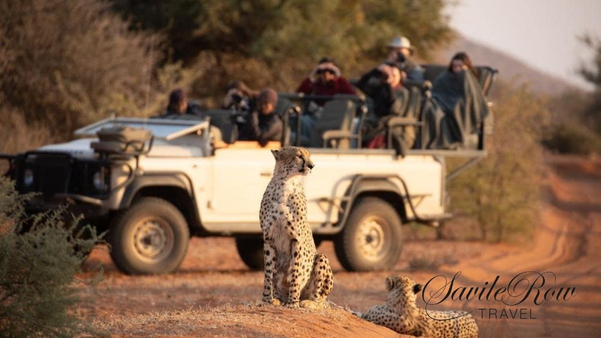 Tswalu Kalahari Cheetah