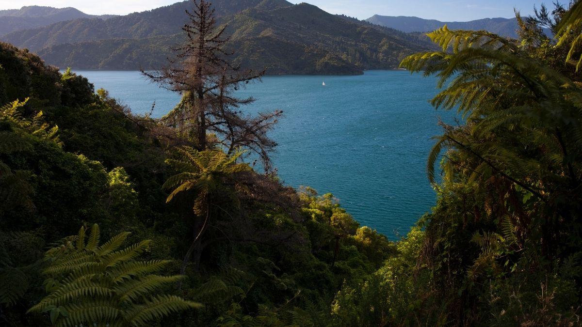 New Zealand Marlborough Sound 1200w