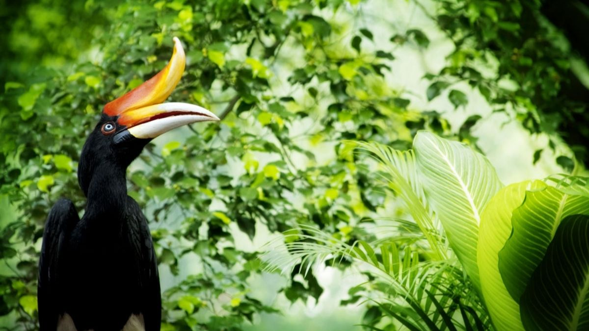 Bird Borneo wildlife photography holiday