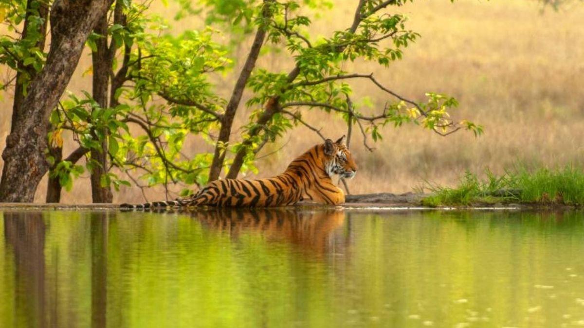Ranthambore National Park 2022 luxury holidays