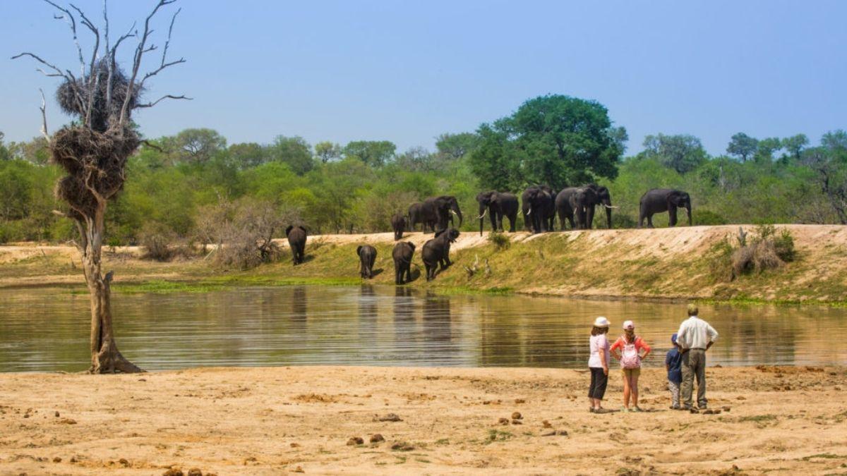 Chitwa Chitwa Sabi Sands Water Hole Elephants South Africa