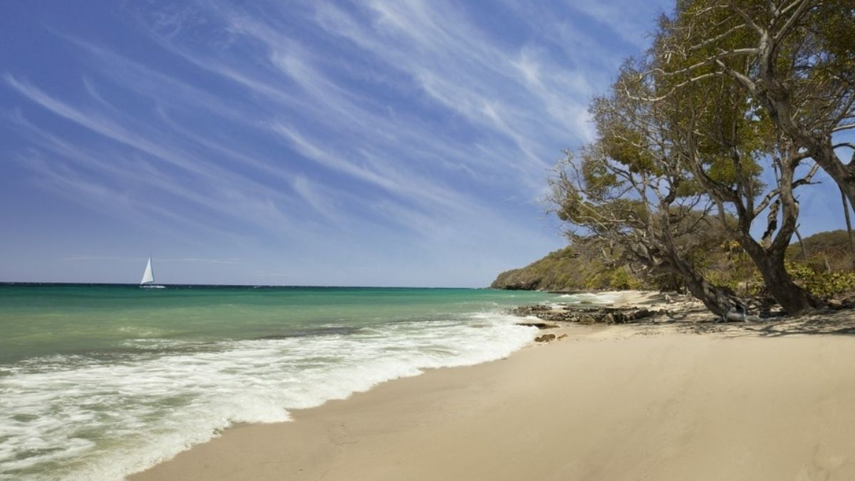 The Liming Beach Bequia